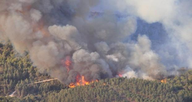حريق بنواحي طنجة بأتي على 4 هكتارات من الغطاء الغابوي