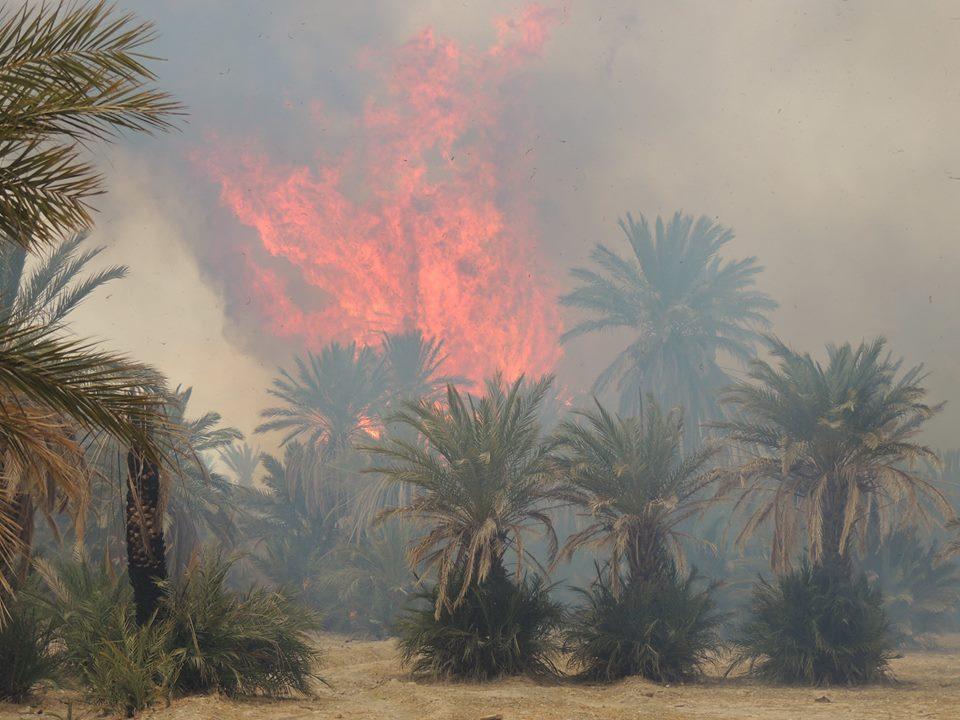 حريق بواحة طاطا يأتي على 4000 نخلة