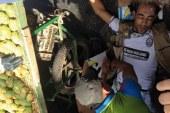 أعوان سلطة في قفص الاتهام بعد ربط عنق بائع «هندية» بعربته بالسلاسل