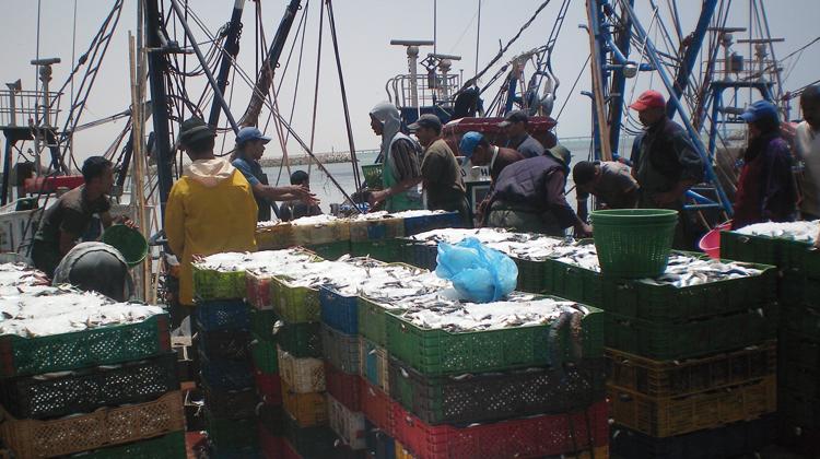 اللجنة الأوربية تصفع الجزائر وتؤكد قانونية اتفاق الصيد البحري مع المغرب