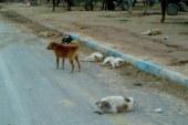 الروائح الكريهة والكلاب الضالة تحاصر سكان جماعة كزناية بطنجة
