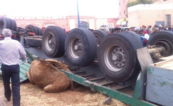 إنقلاب شاحنة محملة بالإبل ببويزكارن+ألبوم صور