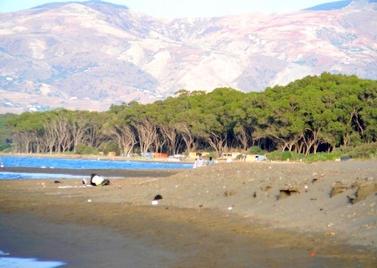 جدل بضواحي الحسيمة بسبب إقامة مشروع سياحي في غابة السواني