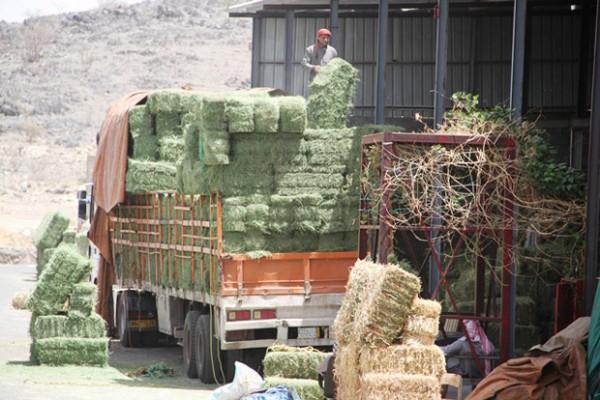 ضبط سيارة للمجلس الإقليمي لآسفي تبيع الأعلاف بأسواق الصويرة