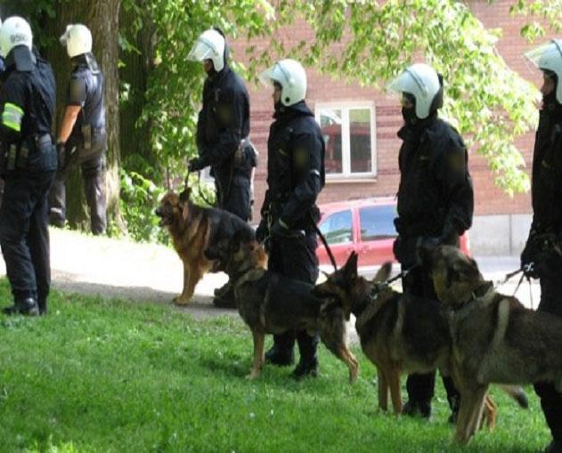 التدخل السريع وكلاب مدربة ودراجون لإيقاف تاجري مخدرات ضواحي الخميسات