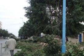 اتهامات للعمدة ووالي الجهة بـ«التورط» في اجتثاث الأشجار من شوارع فاس
