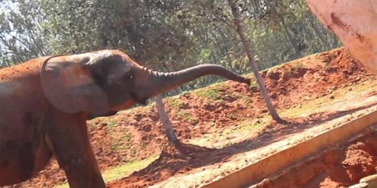 فيل يرمي فتاة بحجارة ويقتلها في حديقة الحيوانات بالرباط
