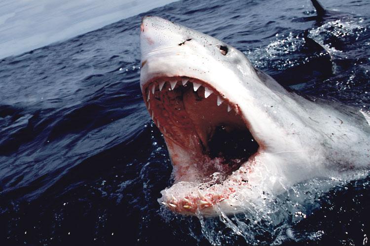هكذا انتشرت إشاعة وجود القرش بسواحل الشمال وخلقت فزعا في نفوس المصطافين