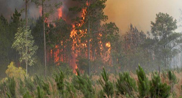 اندلاع حريق غابوي بإقليم وزان