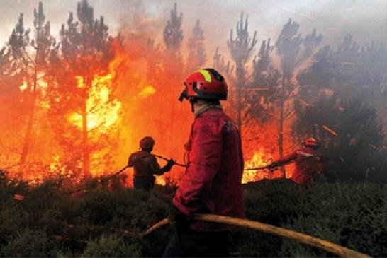 إخماد حريق غابوي تسبب في إتلاف 65 هكتارا بإقليم وزان
