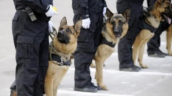 الدرك يستنجد بكلاب مدربة لإيقاف خمسيني قتل زوجته أمام ولديها بعين العودة
