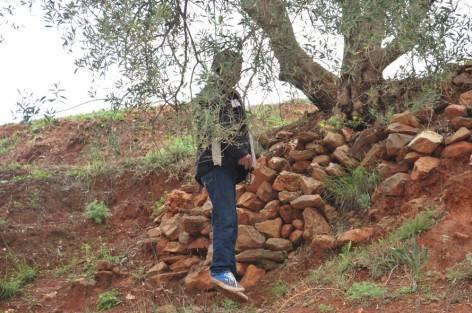 العثور على جثة «مخزني» معلقة وسط الغابة بنواحي إفران