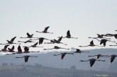 أنفلونزا الطيور تستنفر مصالح السلامة الصحية والدرك والجمارك على الحدود الشرقية