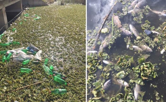 كارثة بيئية تضرب وادي الجواهر بفاس واتهامات لمجلس المدينة بالتغاضي عنها