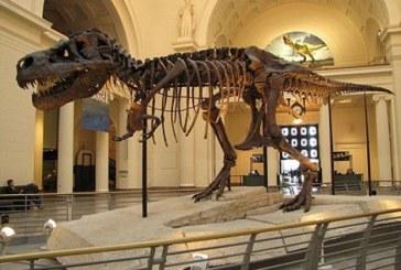 هكذا أفشلت «الأخبار» عملية بيع ديناصور بحري مغربي بباريس وساهمت في استرجاعه