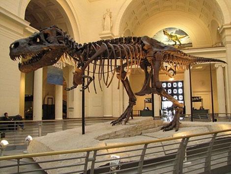 """""""الأخبار"""" تبطل عملية بيع ديناصور بحري تم اكتشافه وتهريبه من المغرب"""