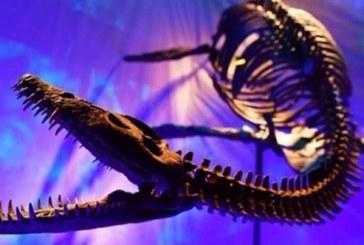 """مطالب بإعداد قانون يؤطر التراث الجيولوجي بعد إحباط """"الأخبار"""" لعملية بيع ديناصور بباريس هرب من المغرب"""