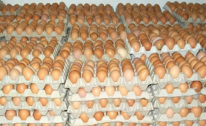 احتفالات رأس السنة تلهب أسعار البيض وندرة المنتوج في ضيعات الإنتاج