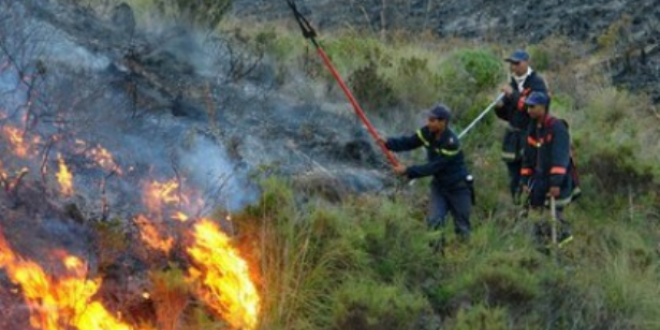 السيطرة بالكامل على حريق غابوي بمنطقة قصر المجاز أتى على نحو 196 هكتارا
