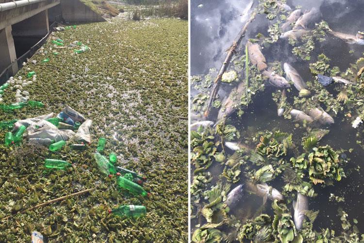 صورة كارثة بيئية تضرب وادي الجواهر بفاس واتهامات لمجلس المدينة بالتغاضي عنها