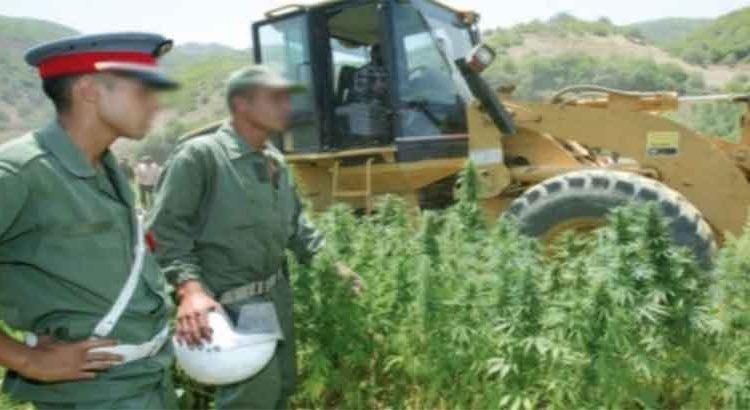 حجز آليات ومضخات تسخّر لاستغلال المياه الجوفية في سقي حقول «الكيف» بتاونات
