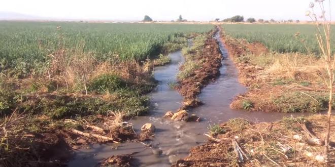 فضيحة سقي خضروات وفواكه بالخميسات بالمياه العادمة