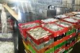 تجار سمك يشتكون لأخنوش لوبيات صيد للأخطبوط بشباك محظورة بالمهدية