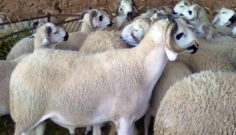صورة عيد الأضحى .. حجز كميات كبيرة من فضلات الدجاج موجهة لتعليف المواشي
