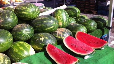 صورة البطيخ المغربي يحتل المرتبة الثالثة عالميا في التصدير