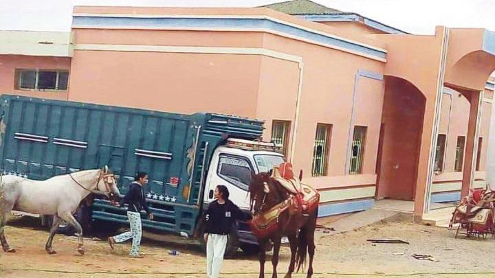 صورة رئيس جماعة يحول ثانوية إلى إسطبل لخيول «التبوريدة»