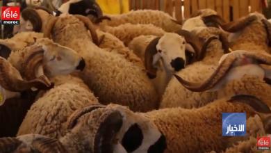 """صورة عيد الأضحى 2019: """"أونسا"""" ترقم ستة ملايين رأس من الأضاحي وتعد 30 سوقا إضافيا للأغنام والماعز"""