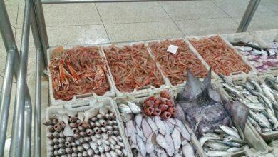 صورة هيئات تطالب وزارة الداخلية بمنع أسماك «الترانزيت»