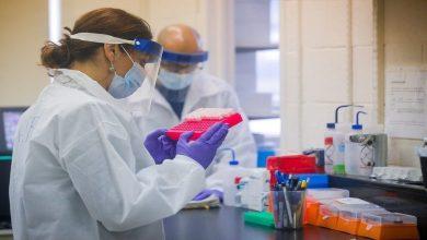 صورة عالم بريطاني يكشف مفاجأة بخصوص نشأة فيروس كورونا