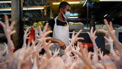 صورة الصين تؤكد وجود فيروس كورونا على قطع دجاج مستوردة من البرازيل