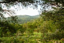 صورة عرض استراتيجية «غابات المغرب 2020-2030» على الفاو